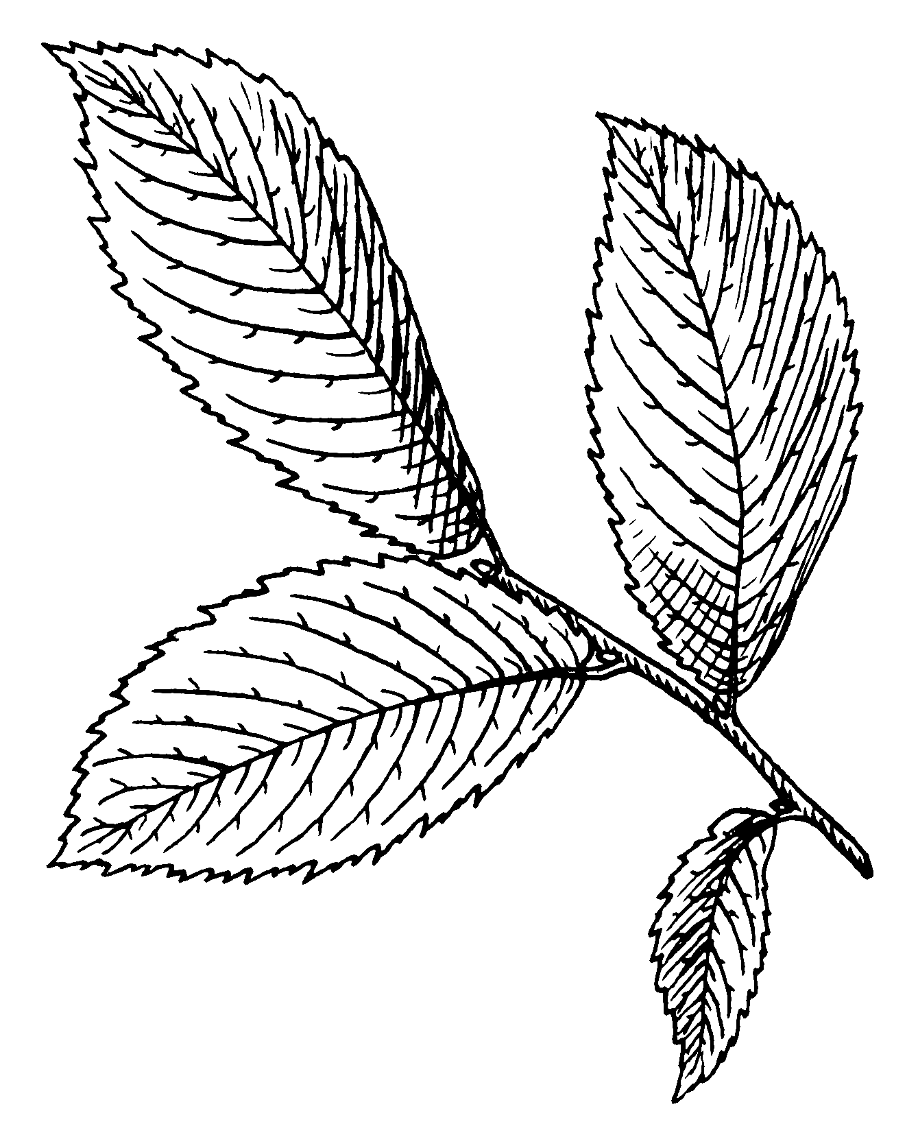 FileElm Leaf 001