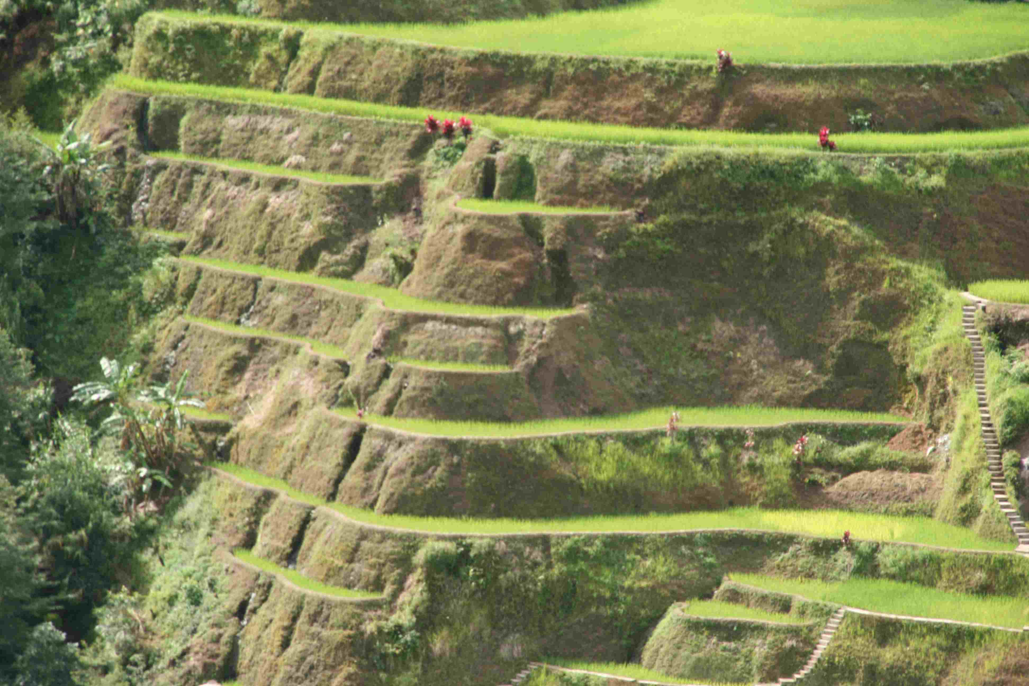 File banaue rice terrace in the philippines 001 jpg the for Terrace farming