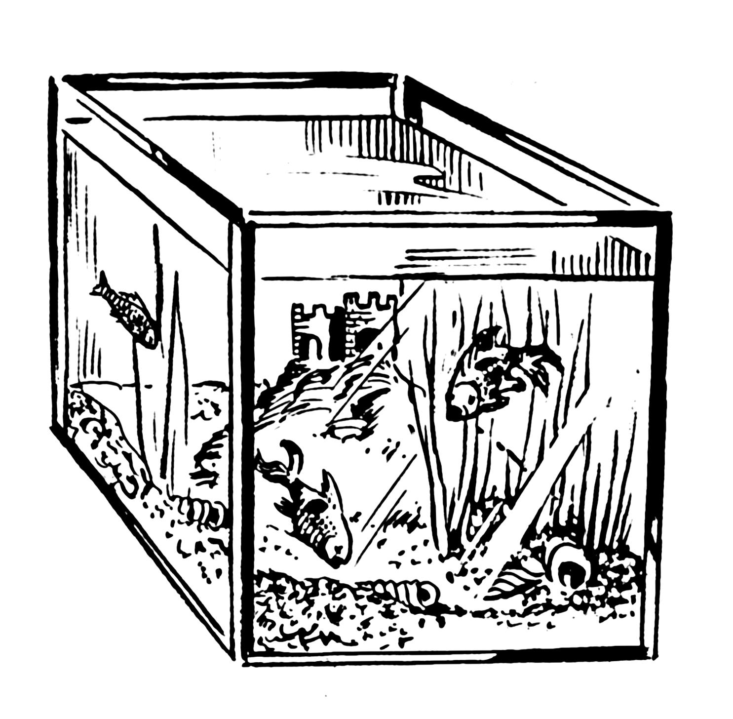 Fish tank drawing pictures - File Aquarium 002 Png
