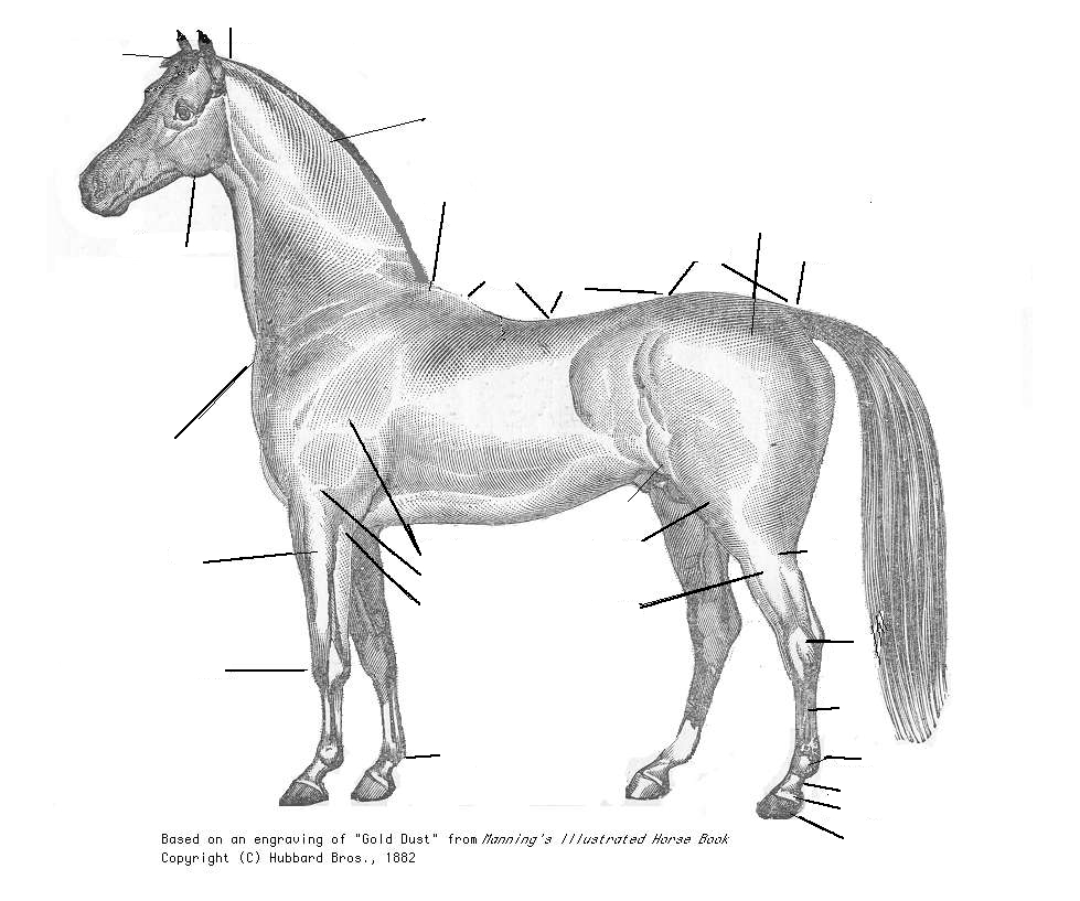 File:Horse Body Parts 001Blank.jpg - The Work of God's ...