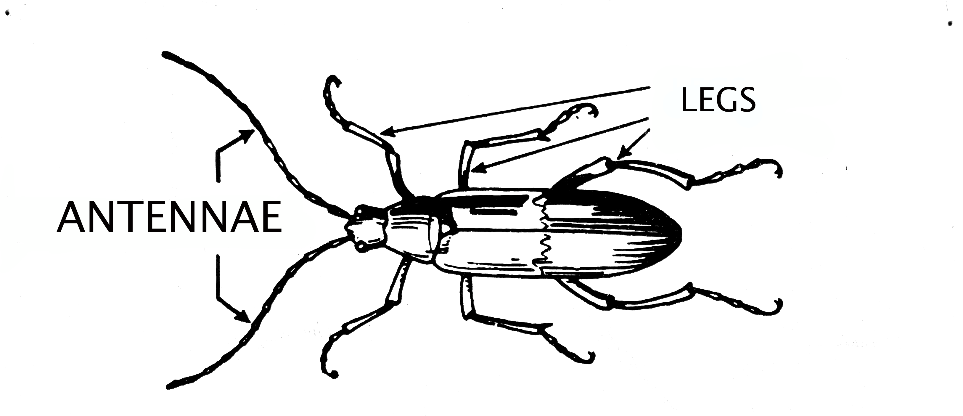 File:Antennae (Insect) 001.png - The Work of God's Children
