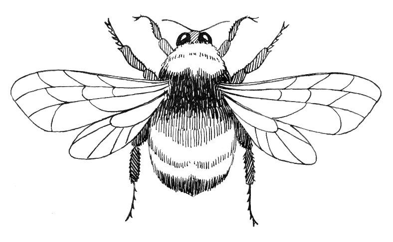 Bumblebee Insect Drawing FileBumblebee 007 jpg