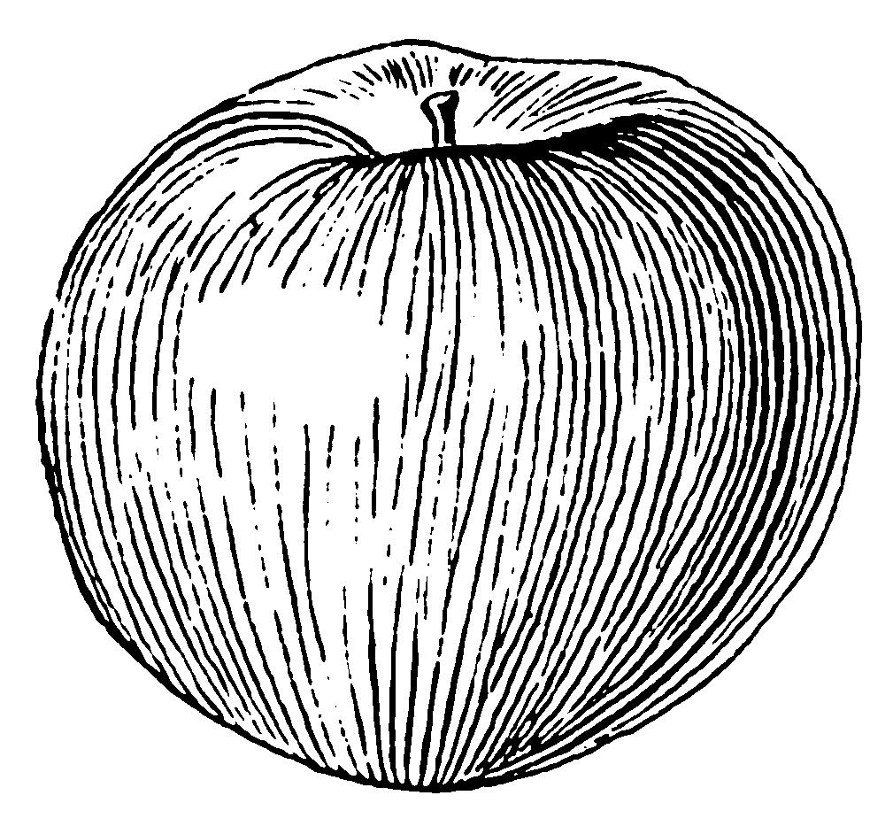Line Drawing Apple : Apple line drawing pixshark images galleries