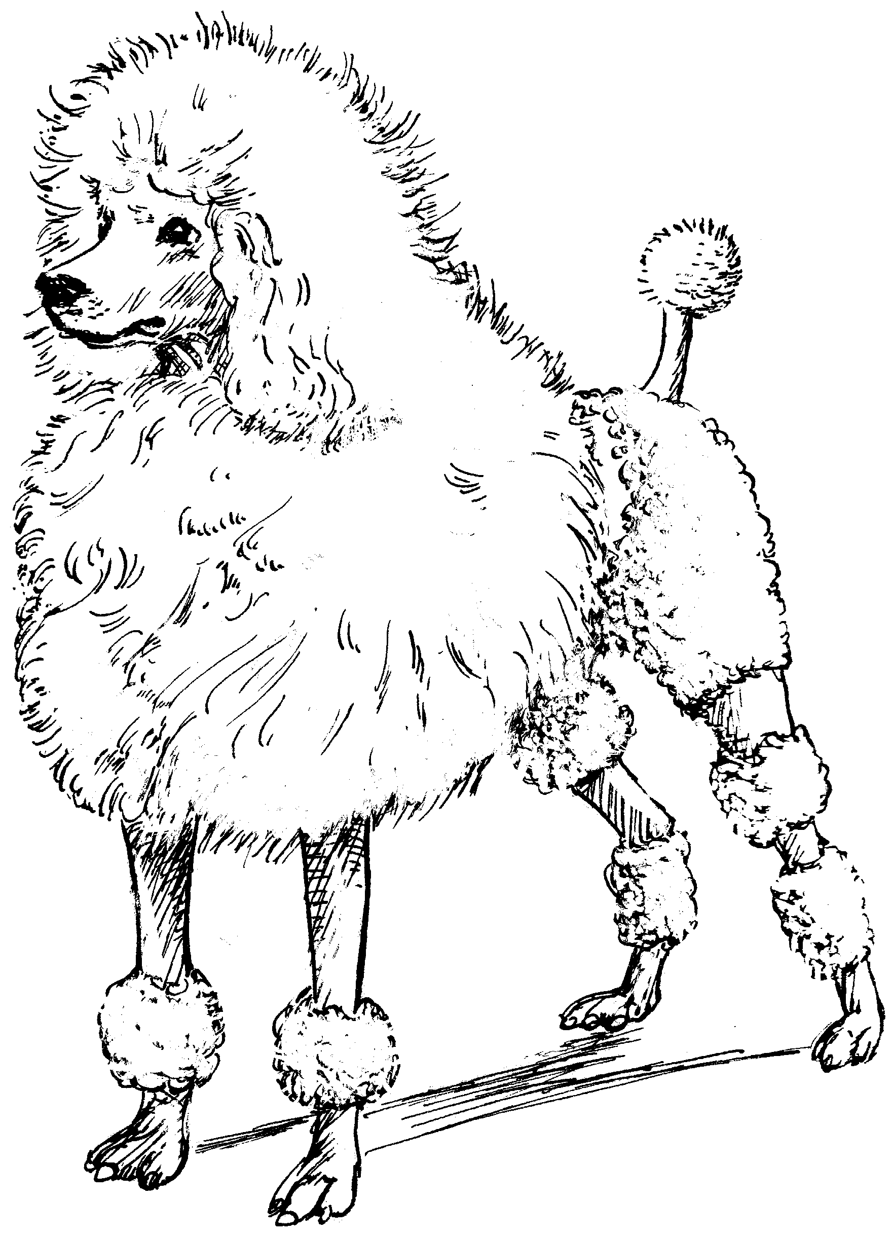 file poodle  psf  png