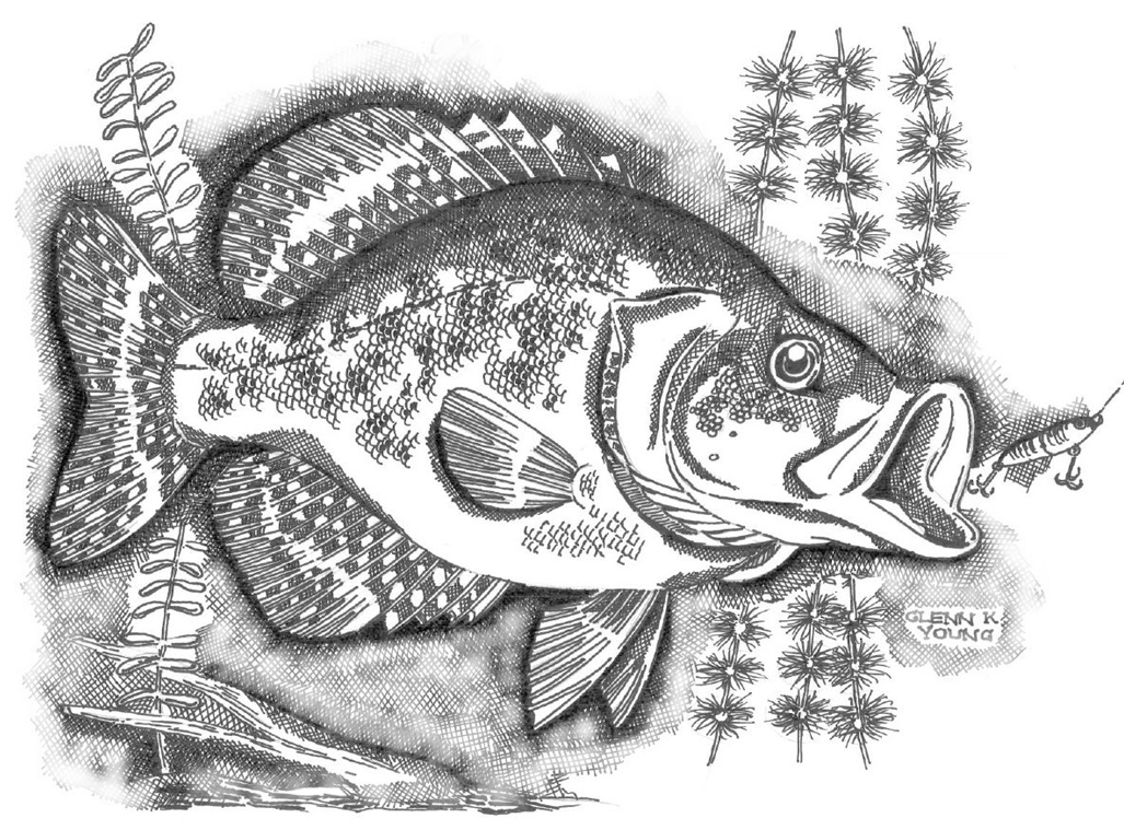 how to draw a walleye