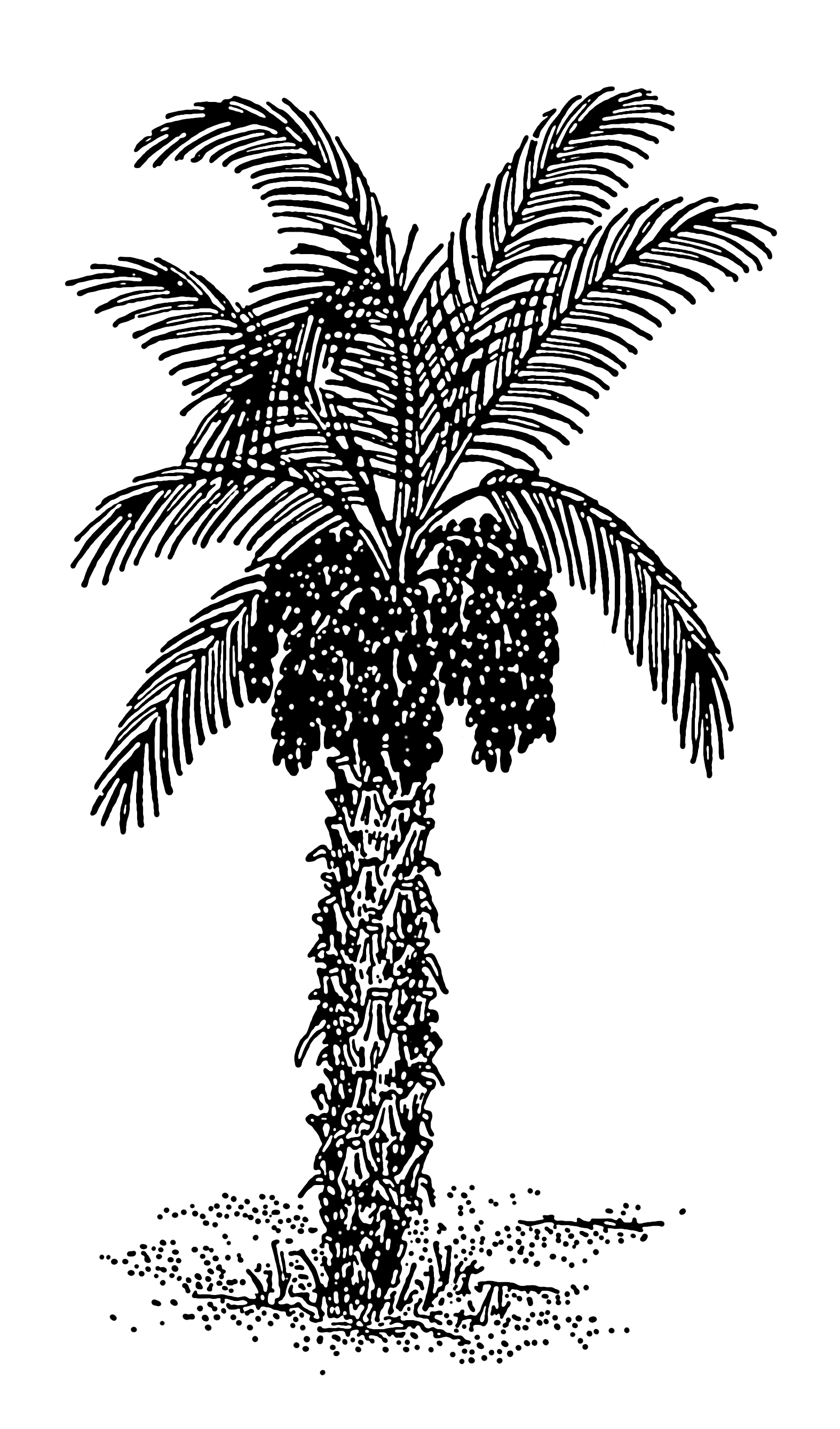 File Date Palm 001 Png The Work Of God S Children