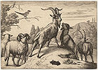 Goats, sheep, and mole 001.jpg