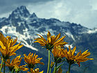 Grand Teton National Park With Flowers 001.jpg