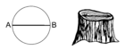 Diameter of a Tree Trunk 001.png