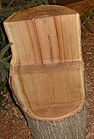 Chestnut Wood 001.jpg