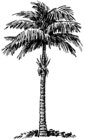 Palm (PSF).png