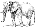 African Elephant 001.png