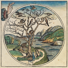 The Hand of God Creating the World - Birds - Fish - Nuremberg chronicles - f 2r.png