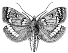 Moth (PSF).png
