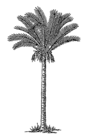 Date Palm 002.png
