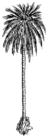 Palm 2 (PSF).png