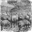 Jacobs Sons Watch the Herd - Genesis 37 2.jpg